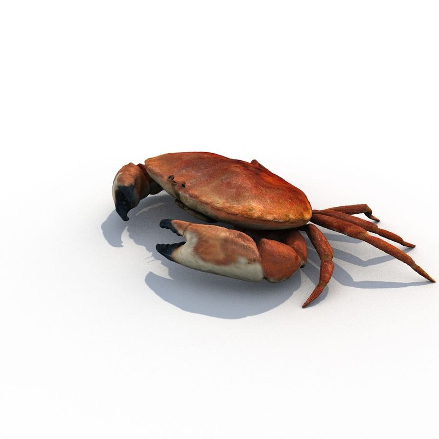 edible crab royalty-free 3d model - Preview no. 8