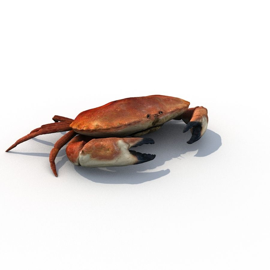 edible crab royalty-free 3d model - Preview no. 4
