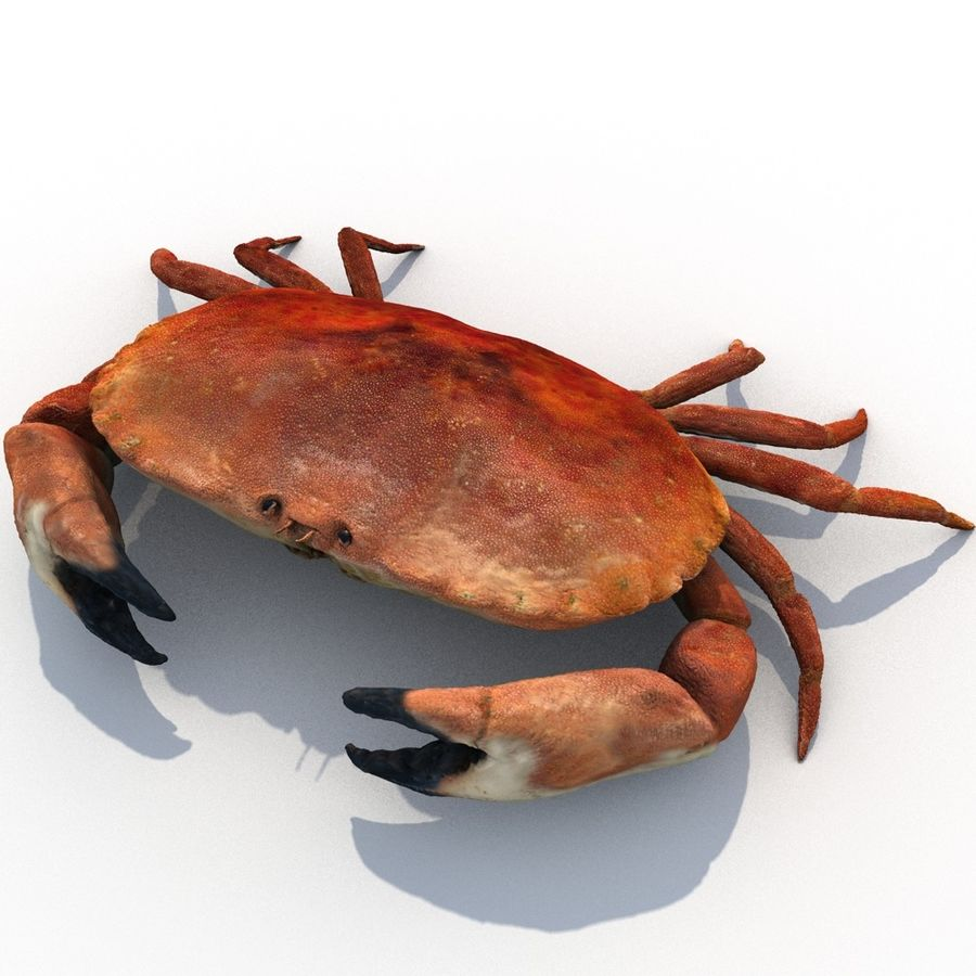 edible crab royalty-free 3d model - Preview no. 1