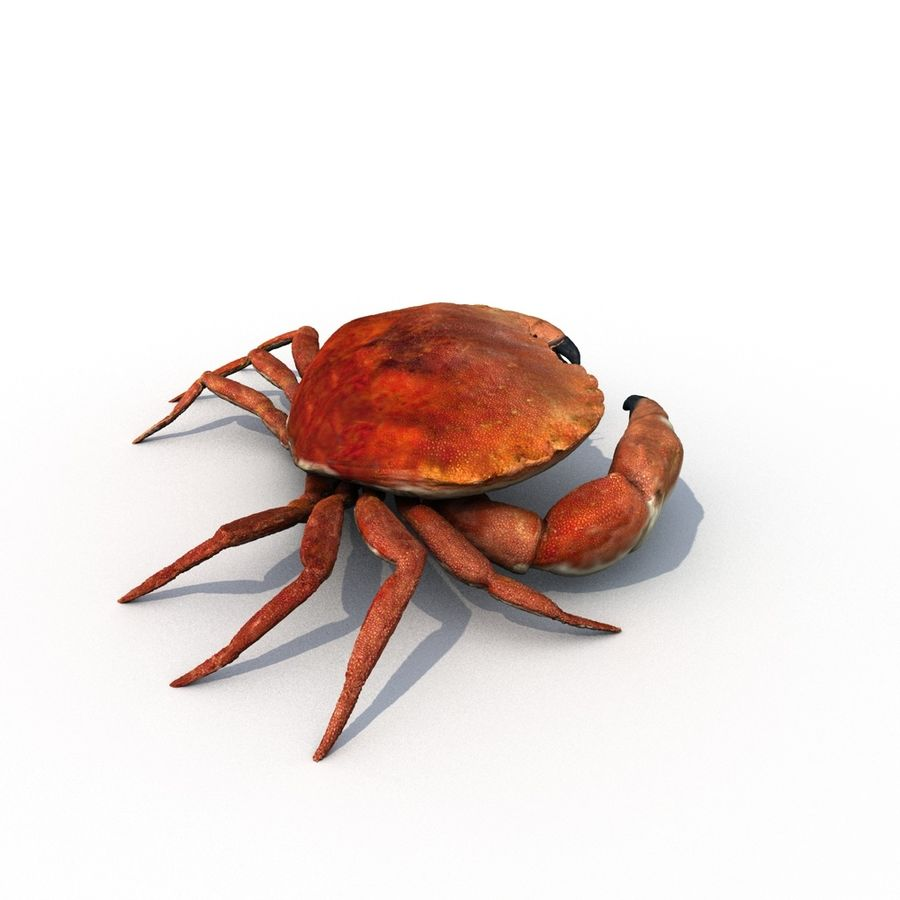 edible crab royalty-free 3d model - Preview no. 5