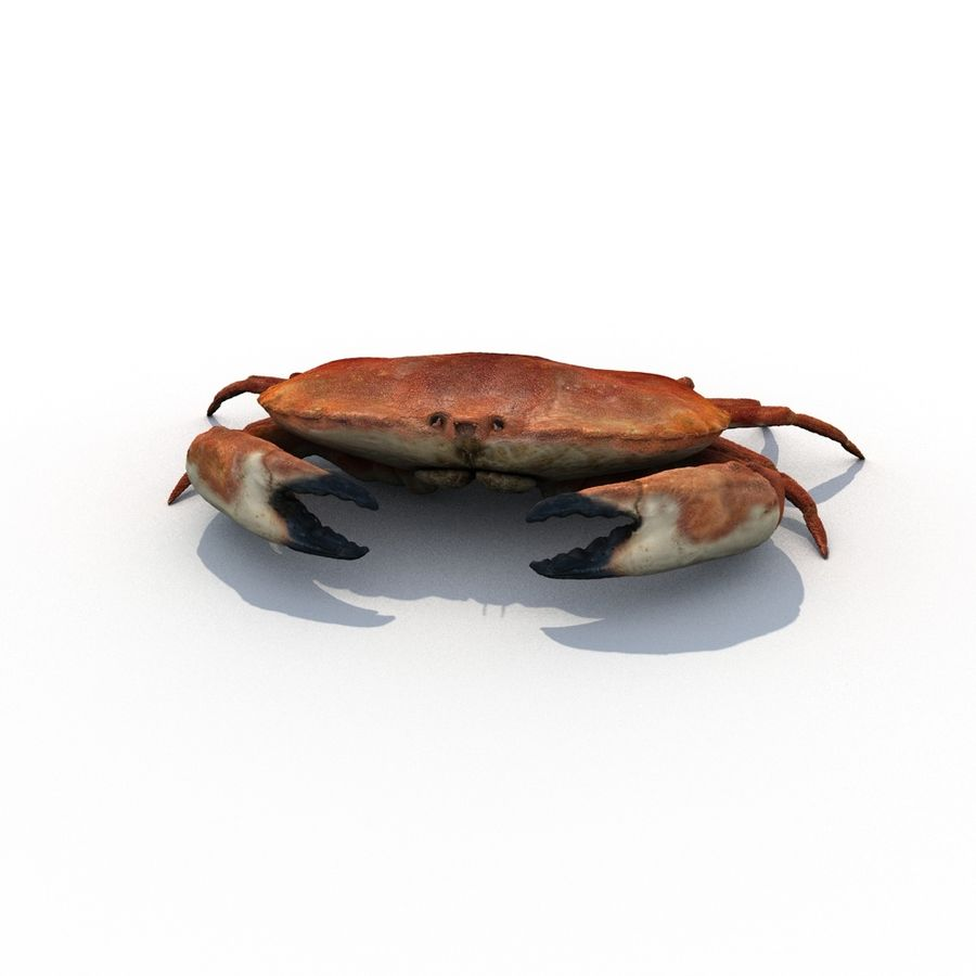 edible crab royalty-free 3d model - Preview no. 3