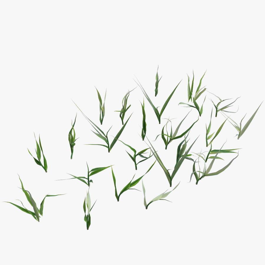 Lawn Grass royalty-free 3d model - Preview no. 12