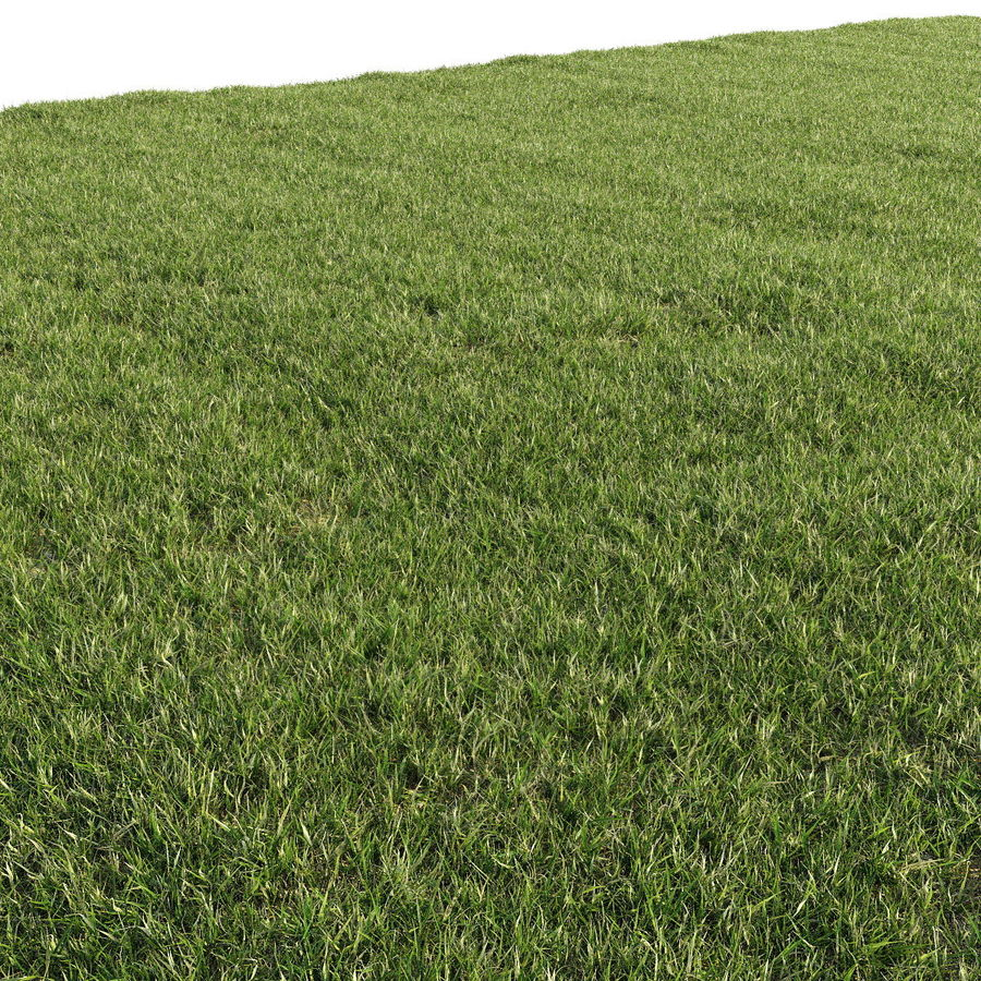 Lawn Grass royalty-free 3d model - Preview no. 2