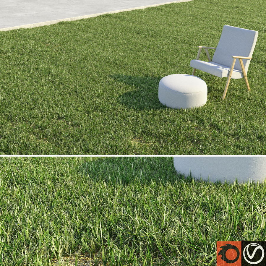 Lawn Grass royalty-free 3d model - Preview no. 1