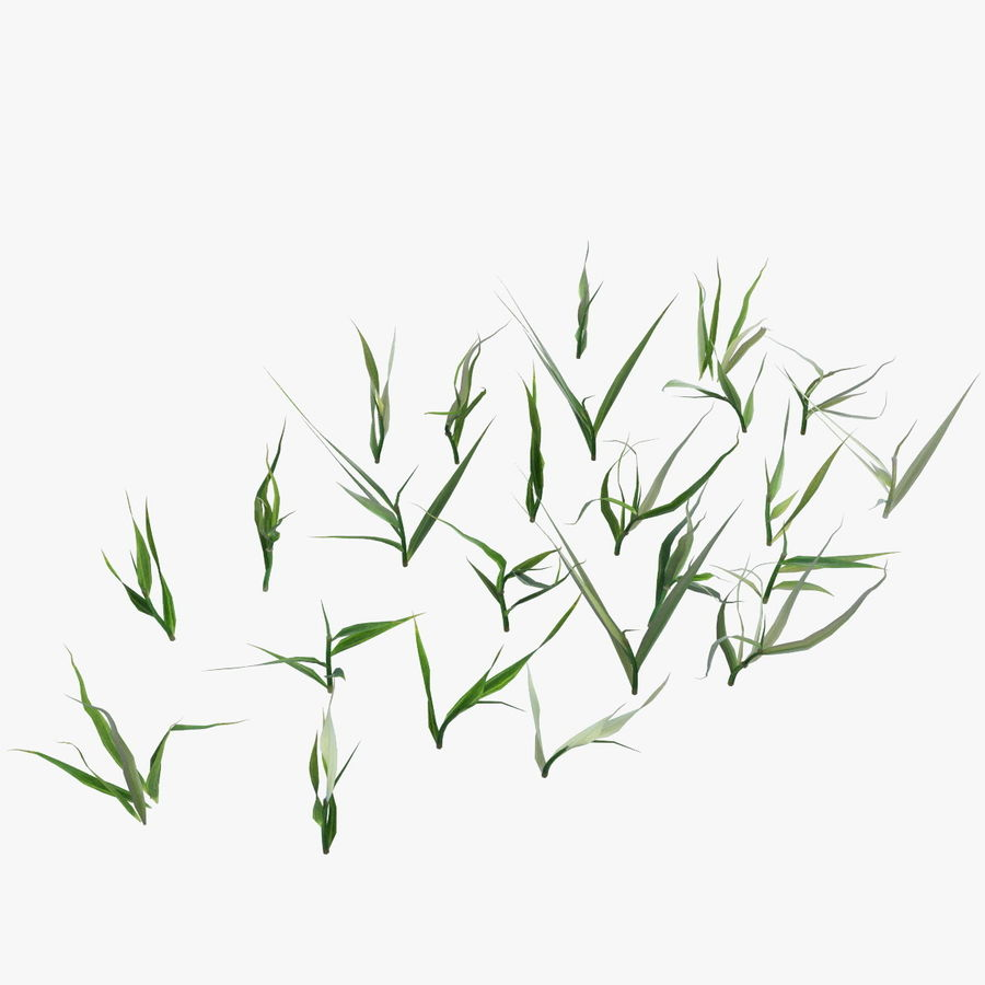 Lawn Grass royalty-free 3d model - Preview no. 11