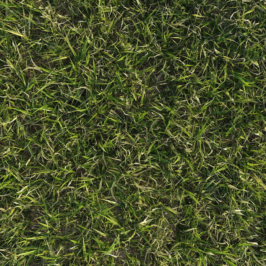 Lawn Grass royalty-free 3d model - Preview no. 6