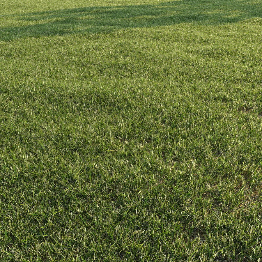 Lawn Grass royalty-free 3d model - Preview no. 4