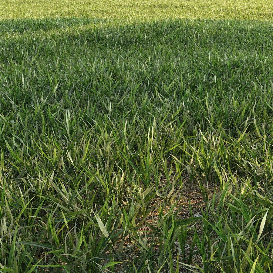 Lawn Grass royalty-free 3d model - Preview no. 5
