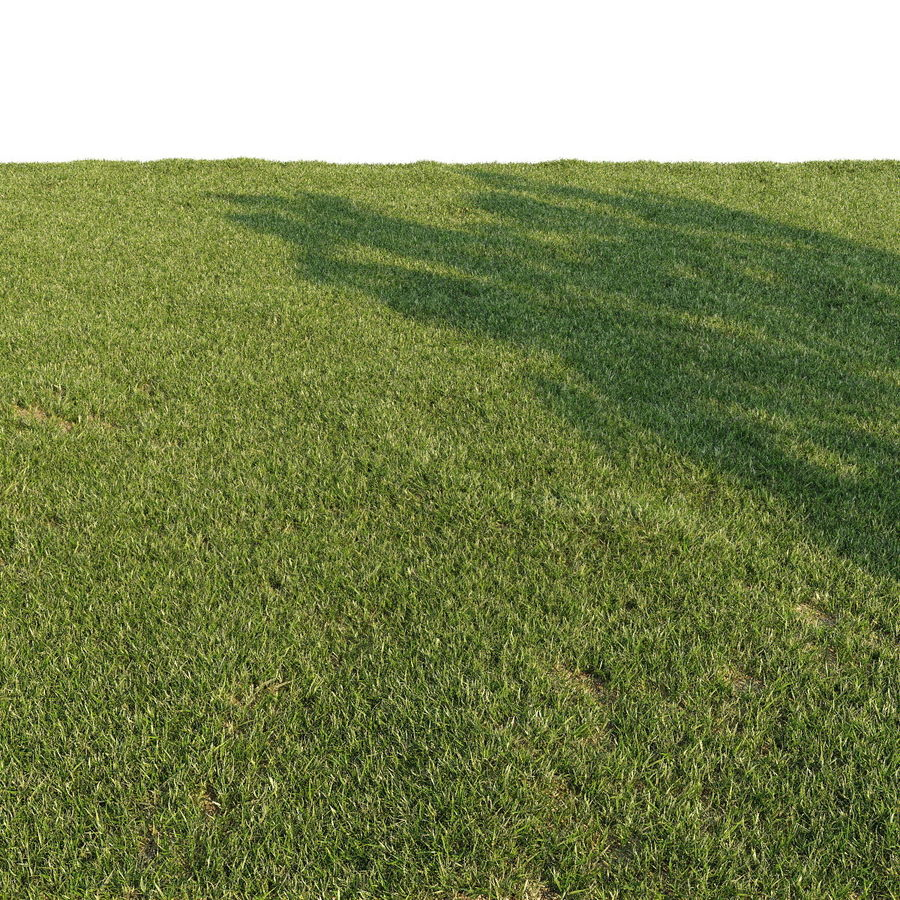 Lawn Grass royalty-free 3d model - Preview no. 3