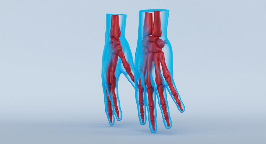 Anatomie de la main bleue royalty-free 3d model - Preview no. 12