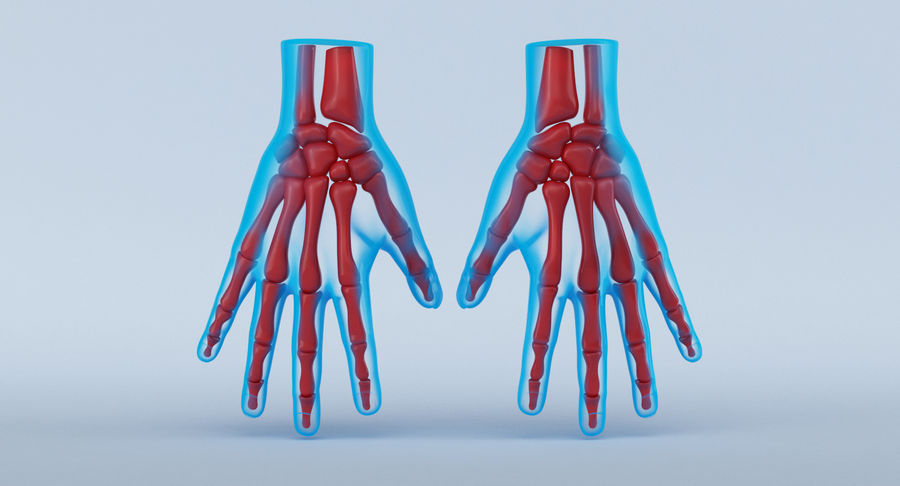 Hand Anatomy Blue royalty-free 3d model - Preview no. 2