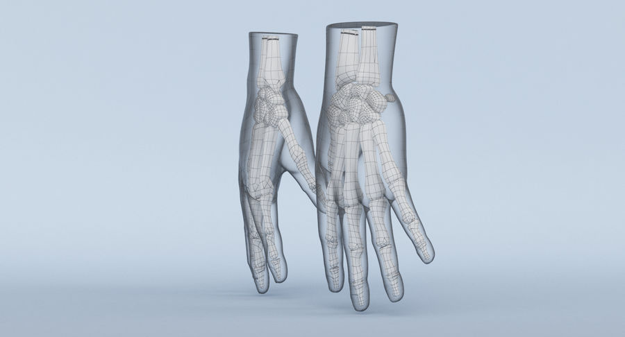 Hand Anatomy Blue royalty-free 3d model - Preview no. 24