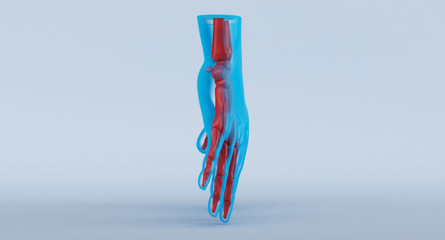 Hand Anatomy Blue royalty-free 3d model - Preview no. 5