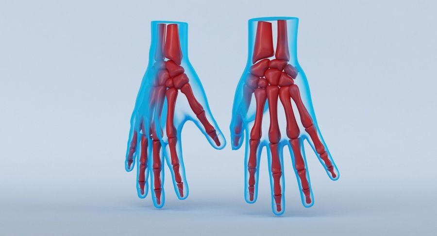 Anatomie de la main bleue royalty-free 3d model - Preview no. 13