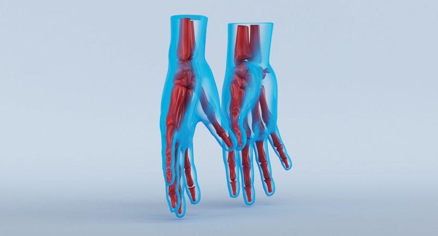 Anatomie de la main bleue royalty-free 3d model - Preview no. 10