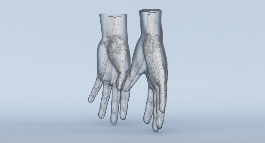 Hand Anatomy Blue royalty-free 3d model - Preview no. 18