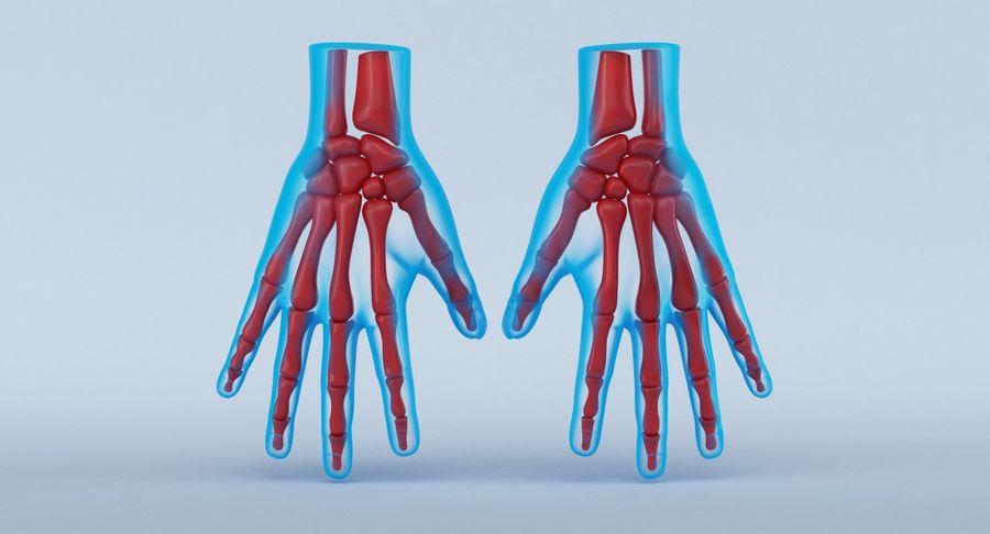 Anatomie de la main bleue royalty-free 3d model - Preview no. 2