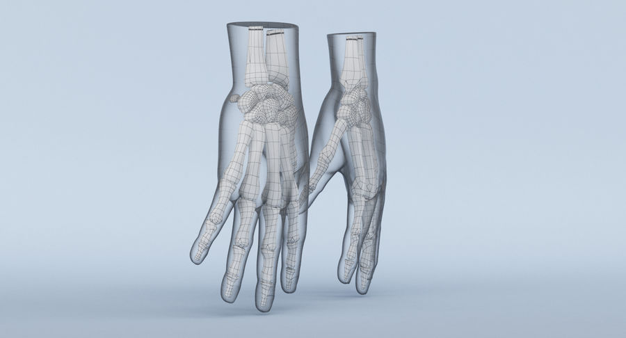 Hand Anatomy Blue royalty-free 3d model - Preview no. 16