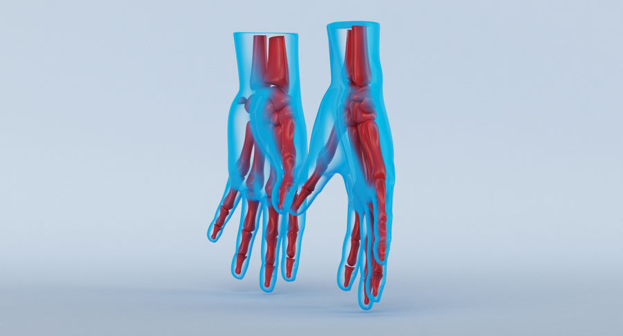 Hand Anatomy Blue royalty-free 3d model - Preview no. 6