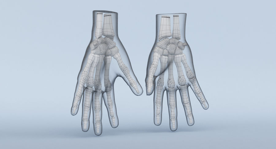Hand Anatomy Blue royalty-free 3d model - Preview no. 21