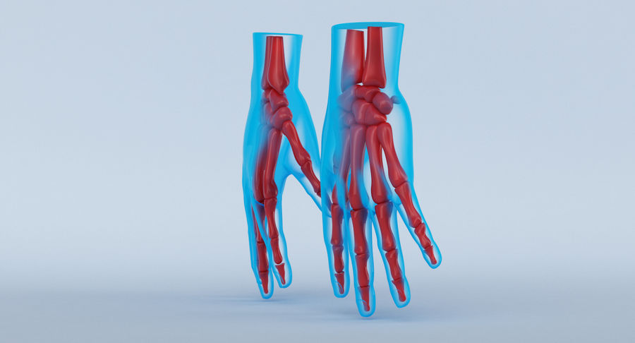 Hand Anatomy Blue royalty-free 3d model - Preview no. 12