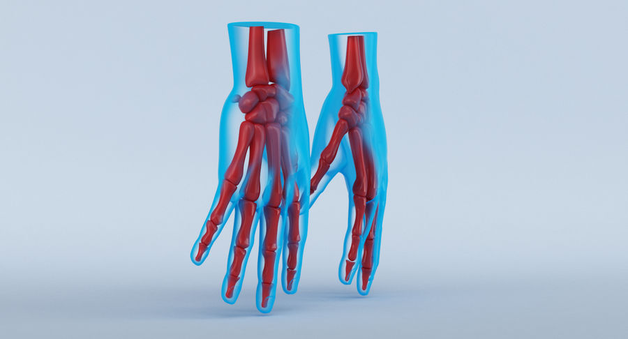 Hand Anatomy Blue royalty-free 3d model - Preview no. 4