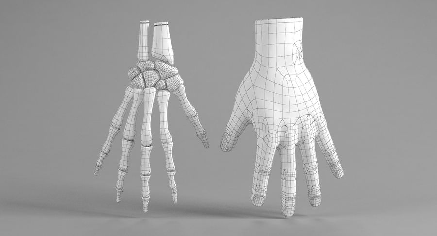 Hand Anatomy Blue royalty-free 3d model - Preview no. 26