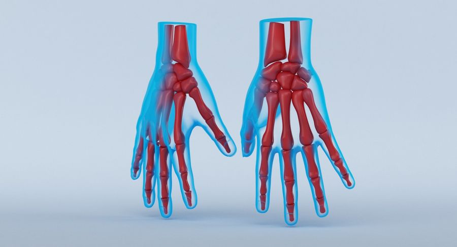 Hand Anatomy Blue royalty-free 3d model - Preview no. 13