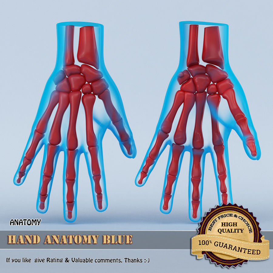 Hand Anatomy Blue royalty-free 3d model - Preview no. 1