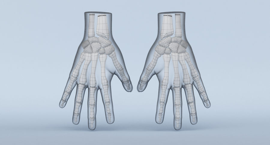 Hand Anatomy Blue royalty-free 3d model - Preview no. 14