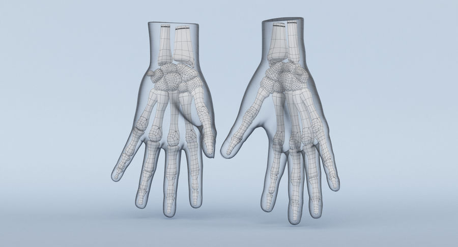 Hand Anatomy Blue royalty-free 3d model - Preview no. 19