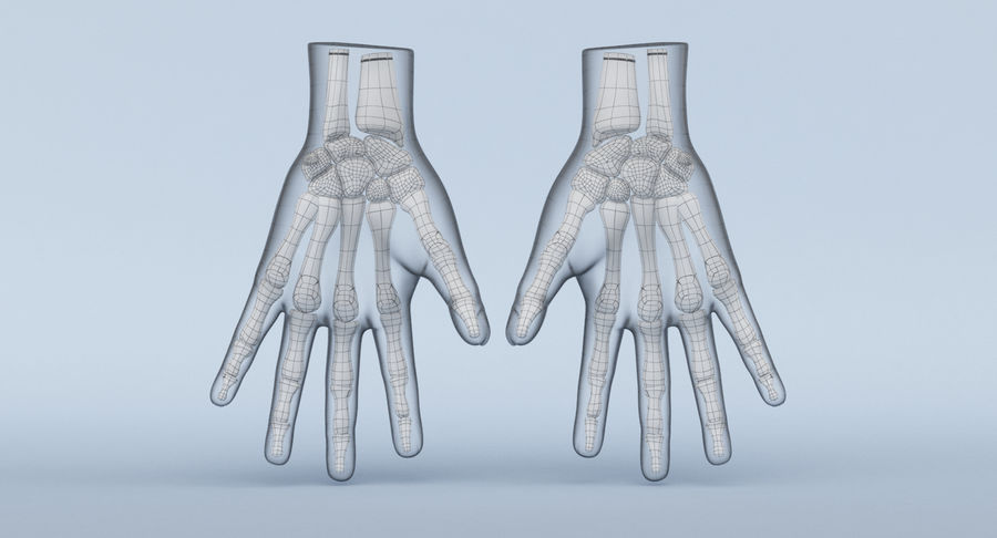 Hand Anatomy Blue royalty-free 3d model - Preview no. 20