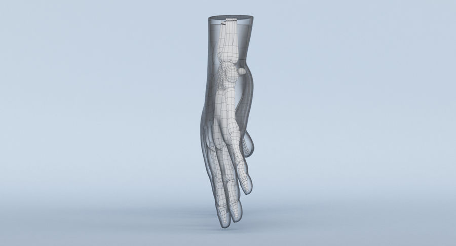 Hand Anatomy Blue royalty-free 3d model - Preview no. 23