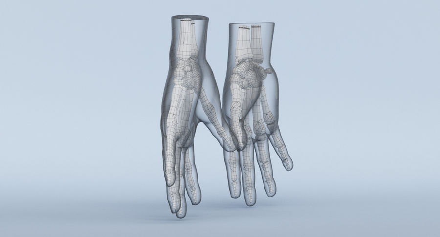 Hand Anatomy Blue royalty-free 3d model - Preview no. 22