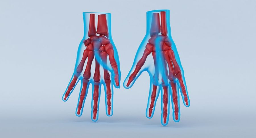 Anatomie de la main bleue royalty-free 3d model - Preview no. 7