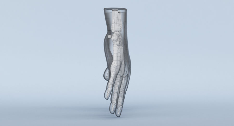 Hand Anatomy Blue royalty-free 3d model - Preview no. 17