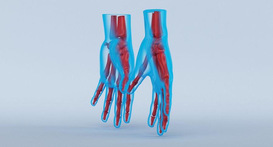 Anatomie de la main bleue royalty-free 3d model - Preview no. 6