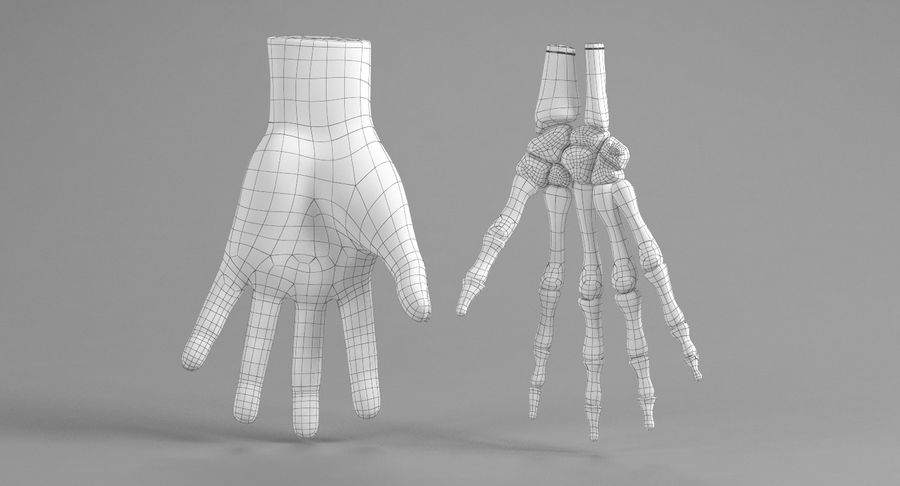Anatomie de la main bleue royalty-free 3d model - Preview no. 27
