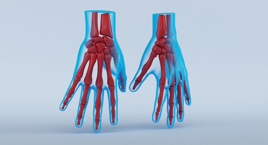 Anatomie de la main bleue royalty-free 3d model - Preview no. 3