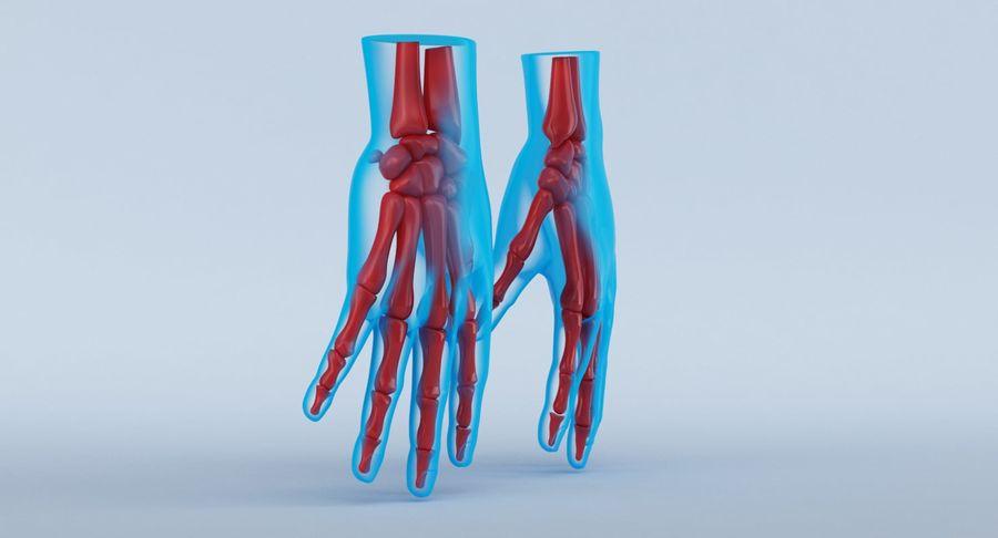Anatomie de la main bleue royalty-free 3d model - Preview no. 4