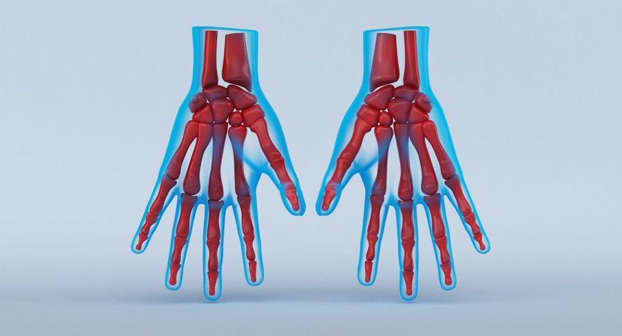 Anatomie de la main bleue royalty-free 3d model - Preview no. 8