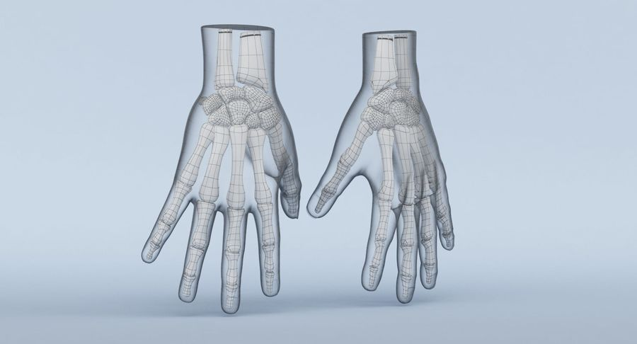 Anatomie de la main bleue royalty-free 3d model - Preview no. 15