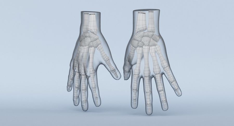 Hand Anatomy Blue royalty-free 3d model - Preview no. 25