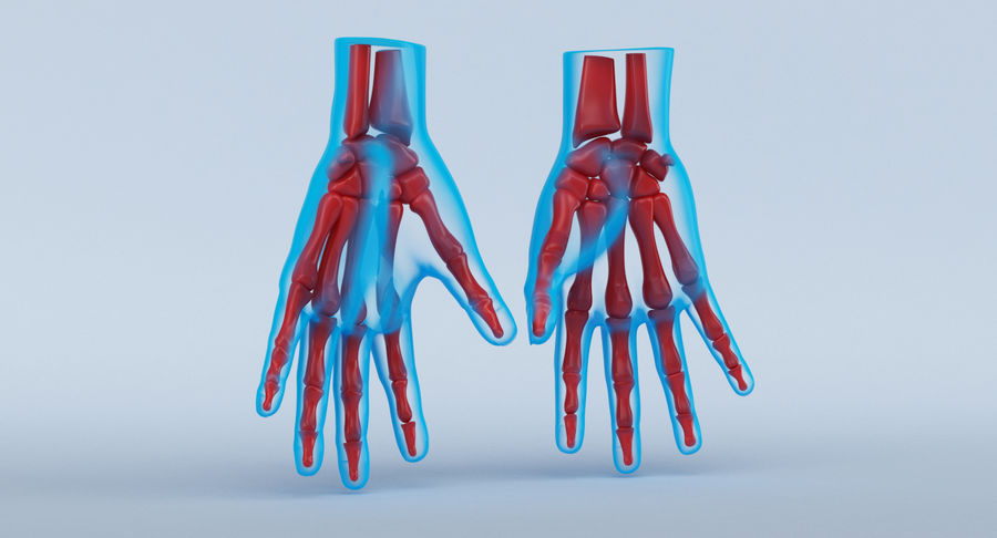 Hand Anatomy Blue royalty-free 3d model - Preview no. 9