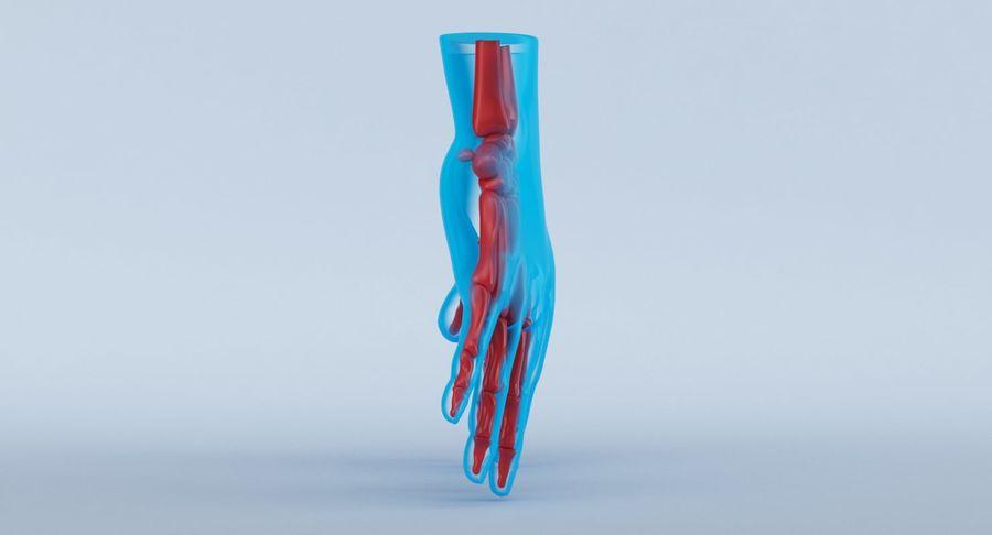 Anatomie de la main bleue royalty-free 3d model - Preview no. 5