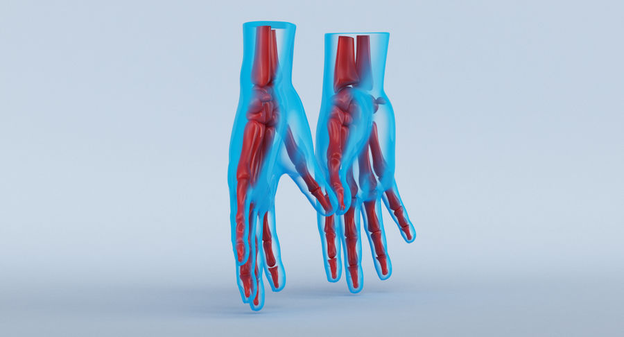 Hand Anatomy Blue royalty-free 3d model - Preview no. 10