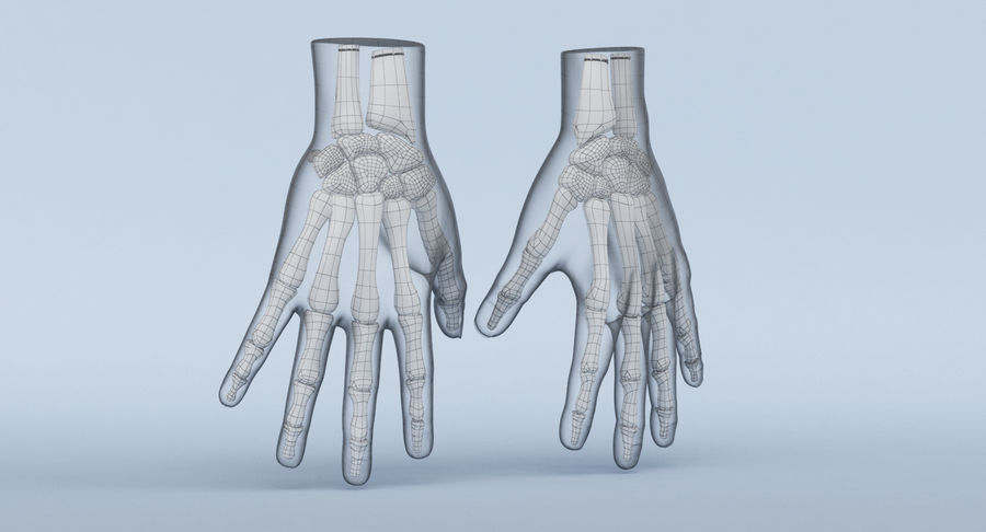 Hand Anatomy Blue royalty-free 3d model - Preview no. 15