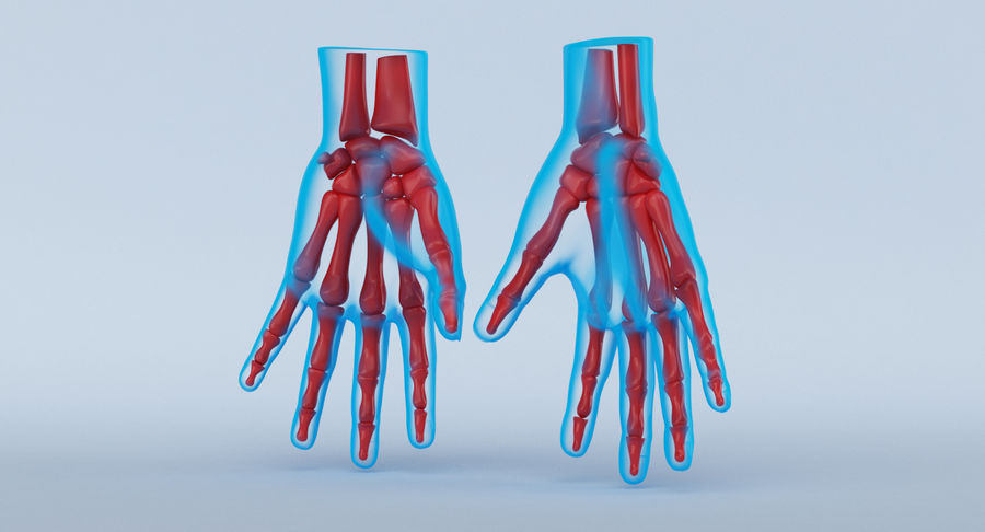Hand Anatomy Blue royalty-free 3d model - Preview no. 7