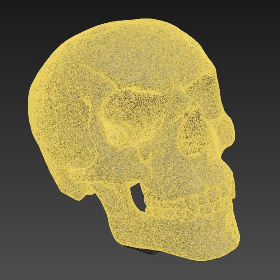 Fossilized human skull (voor 3D-printen) royalty-free 3d model - Preview no. 5