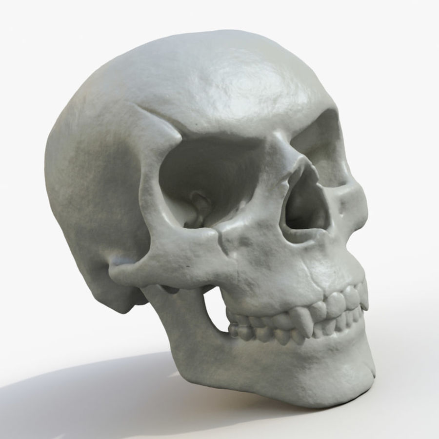 Fossilized human skull (voor 3D-printen) royalty-free 3d model - Preview no. 1